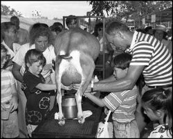 [Milking Demonstration]