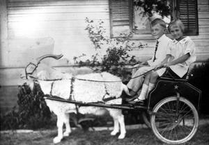 [Children in Goat-Pulled Cart]