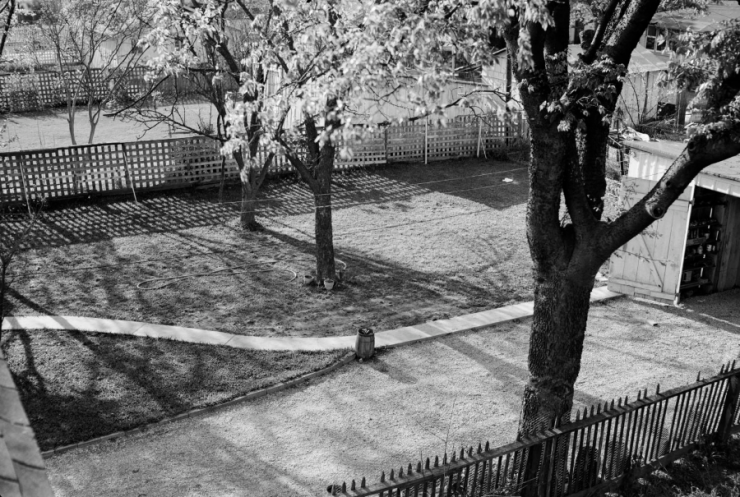 Black and white image of a backyard with trees, a shed, and a walking path.